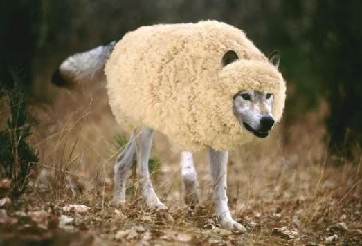 lobo cordeiro